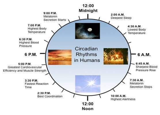 Circadian Rhythm (and other life-altering experiences)