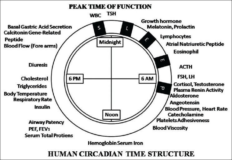 what it means to keep to a circadian rhythm