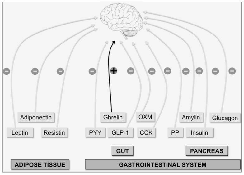 Gut hormones (compressed)