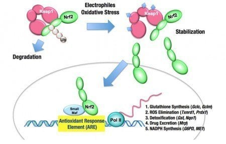 Nrf2 The Central Detox Regulator And Natural Ways To