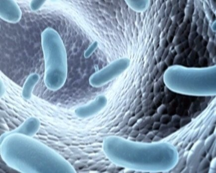 Top 13 Scientific Health Benefits of L Reuteri - Selfhacked
