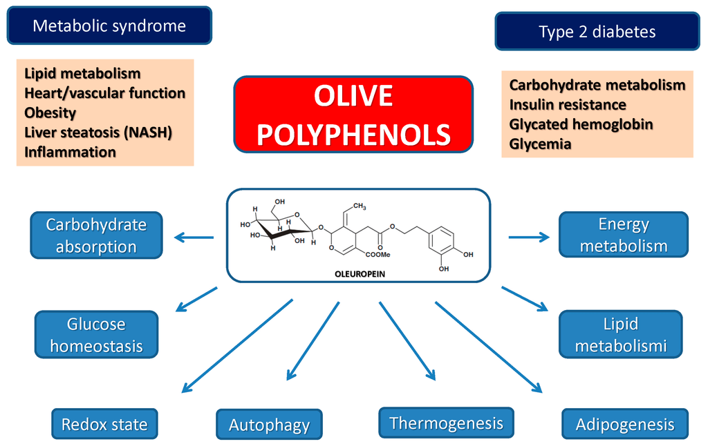 Olive Phenols