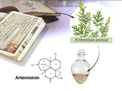 Health Effects of Artemisinin