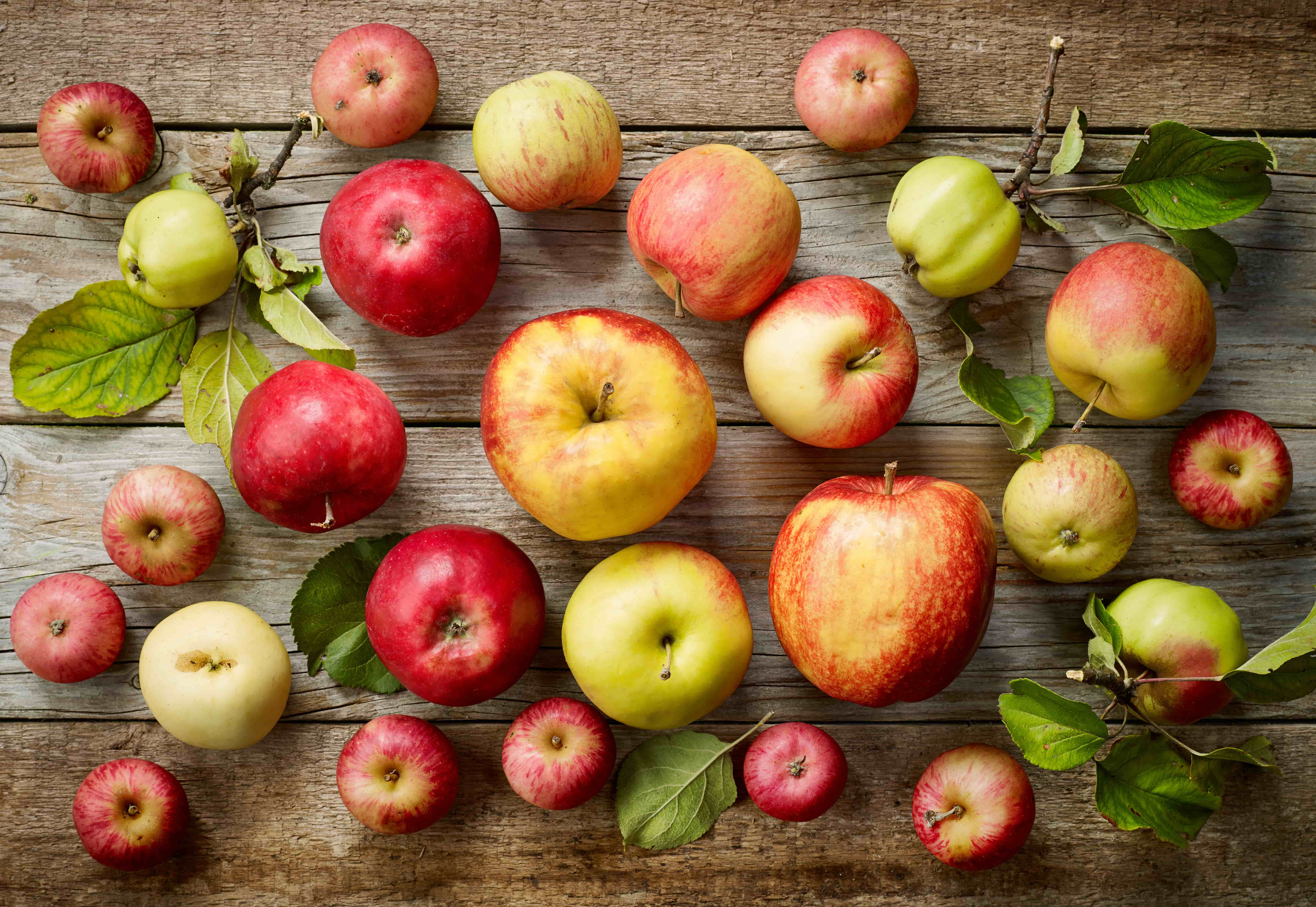 Apples, a source of malic acid