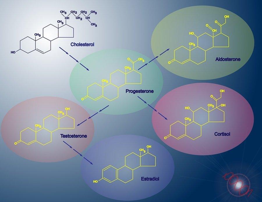 bigstock-Steroidogenesis-23181332-min