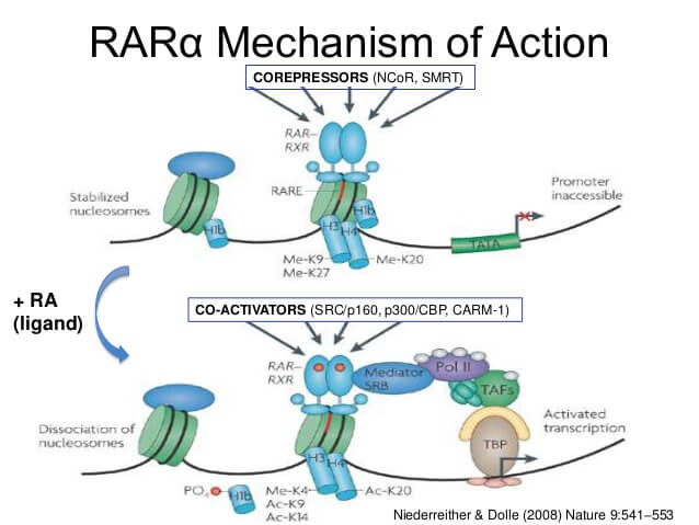 Retinoic Acid Receptors
