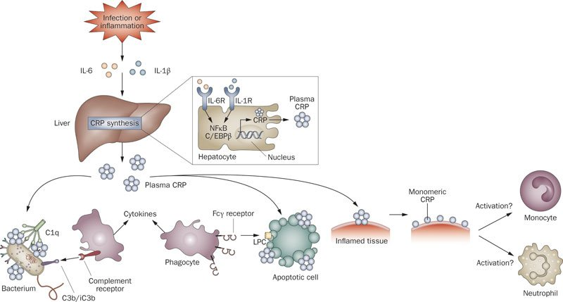 liver disease steroid treatment