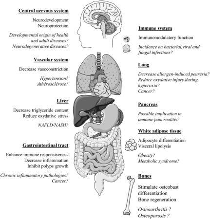 https://www.ncbi.nlm.nih.gov/pubmed/26981846, image from Servier Medical Art