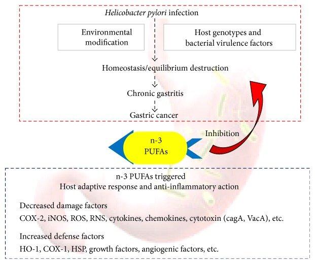 h pylori infection natural cure
