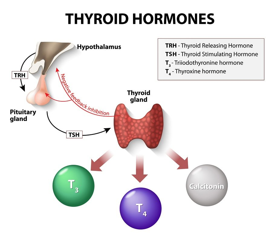 Top 10 Surprising Factors That Decrease Thyroid Hormones Selfhacked