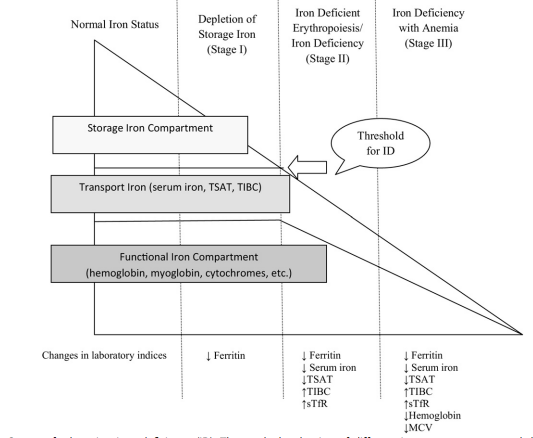 Stages of iron deficiency anemia and corresponding changes in lab test numbers, source: https://www.ncbi.nlm.nih.gov/pmc/articles/PMC3381289/