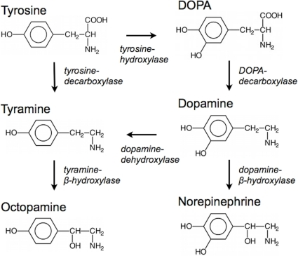 54 Supplements & Drugs/ Agonists to Increase Dopamine - SelfHacked