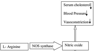 13 Proven L-Arginine Health Benefits + Dosage, Side Effects