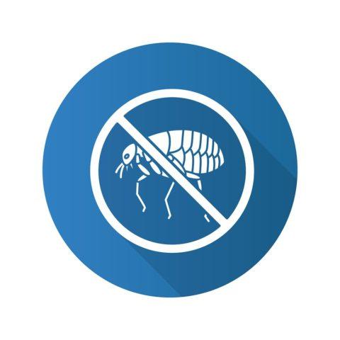stop fleas
