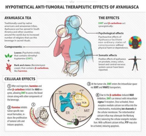 How Ayahuasca combats cancer