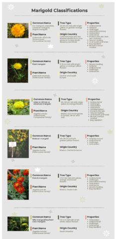 Marigold types