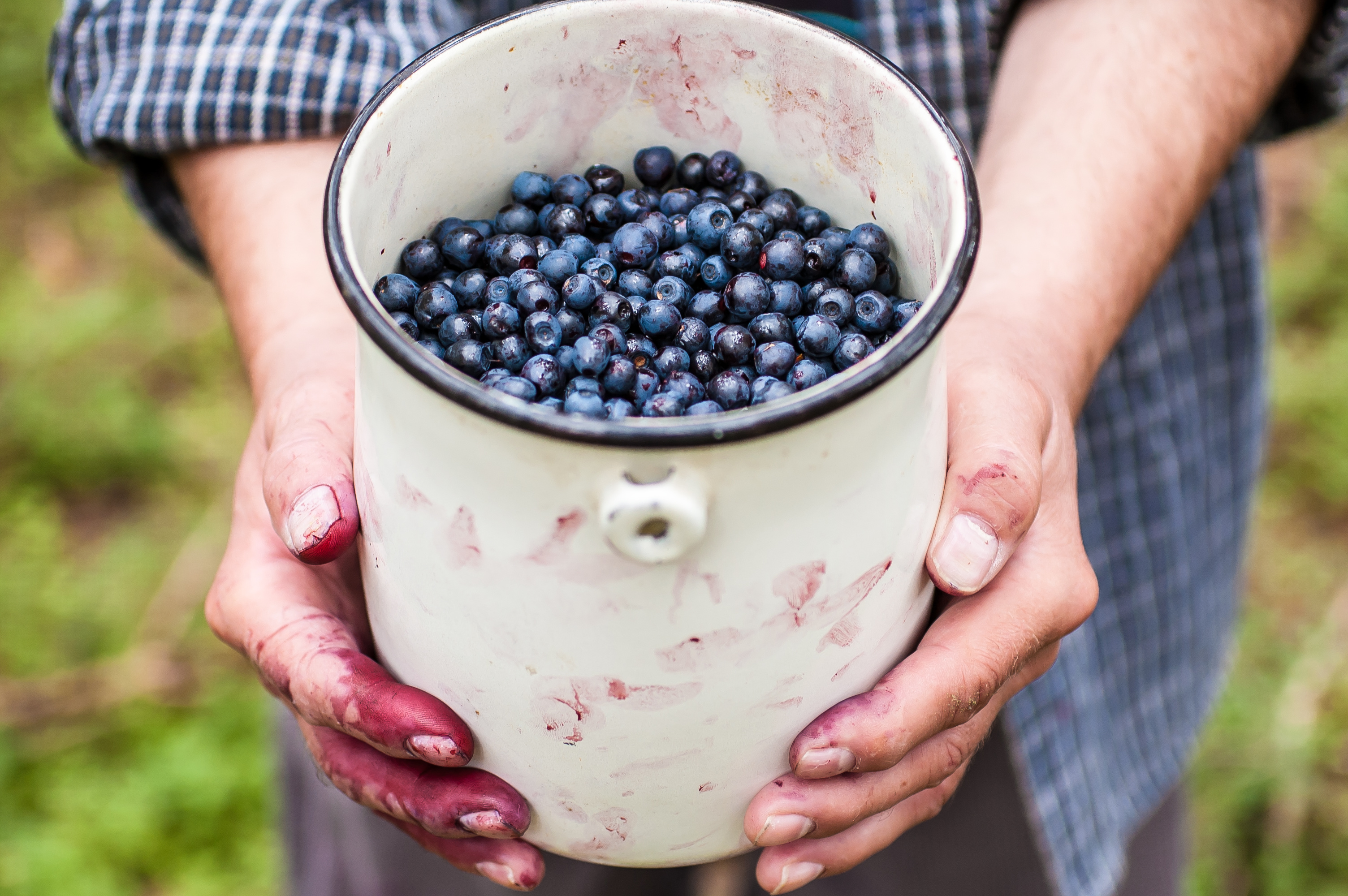 7 Bilberry Benefits Incl Eye Health Side Effects Dosage