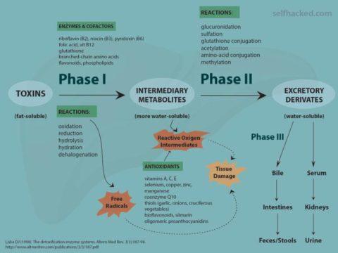 detoxification2