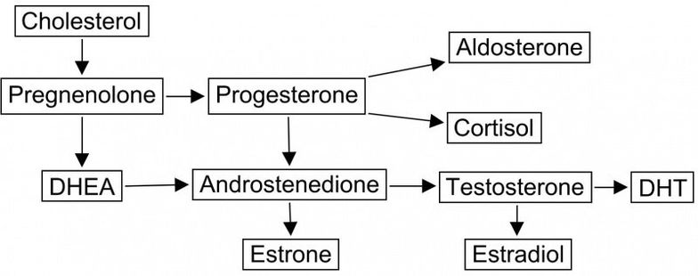 Diagram showing cholesterol conversion pathways in hormone replacement therapy