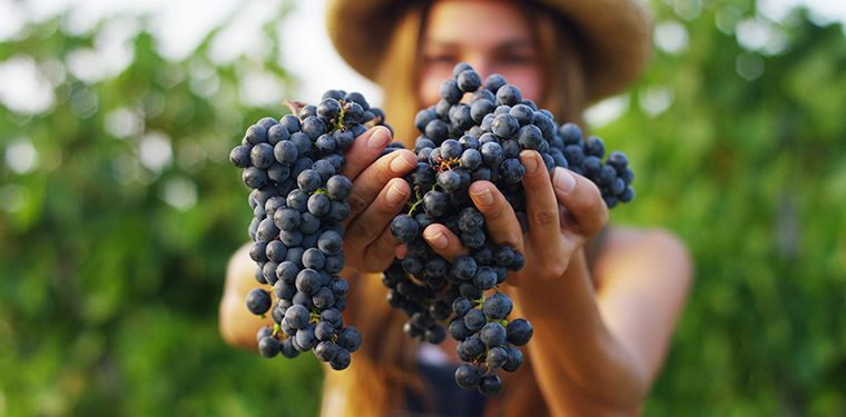 16 Grape Seed Extract Benefits + Side Effects & Dosage