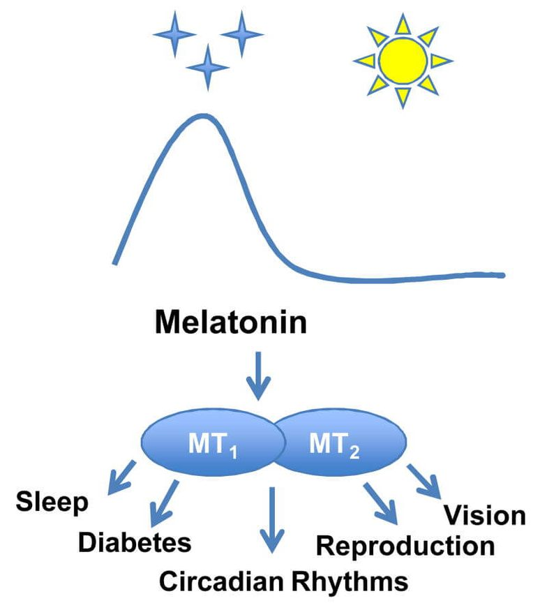 Ways to Naturally Increase or Decrease Melatonin Levels