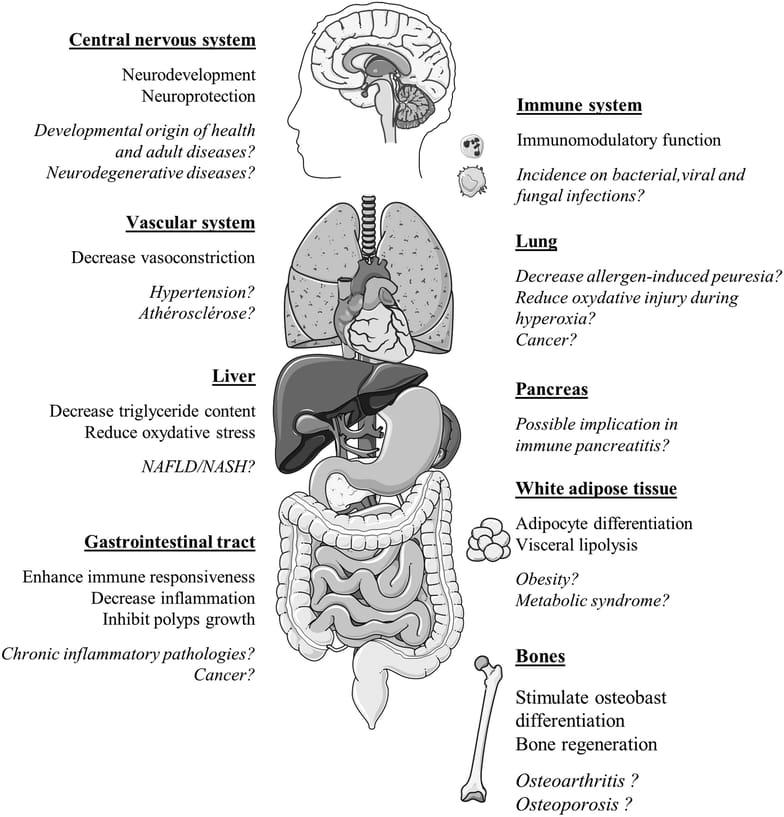 20 Health Benefits Of Lactoferrin