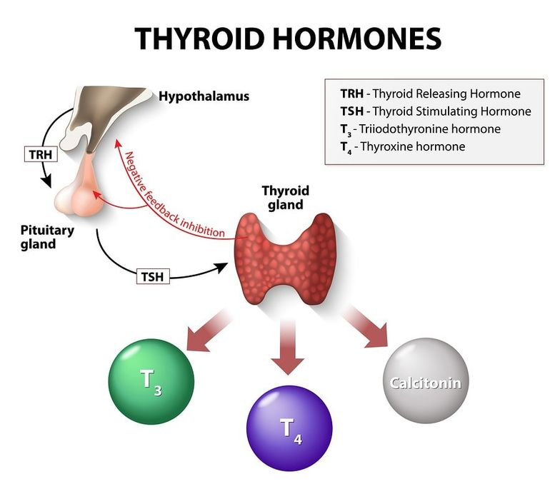 Top 12 Surprising Factors That Decrease Thyroid Hormones